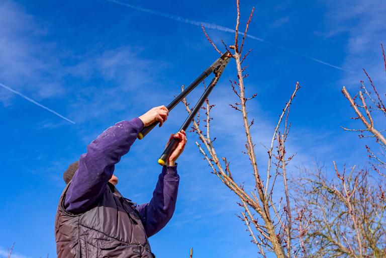Branch Lopping