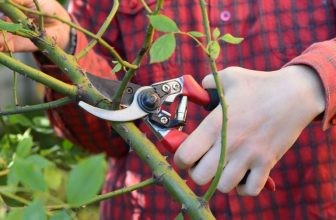 How Do You Sharpen Felco Secateurs