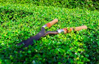 Pruning Shears vs Garden Scissors – Know the Difference