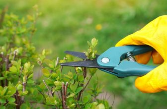 The Best Secateurs for Pruning Your Garden