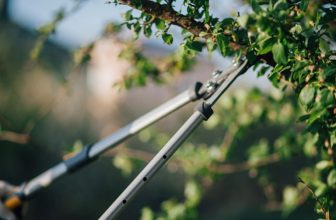 Use a Lopper and Tree Pruner
