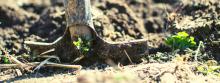 Best Garden Shredder 2021 – Buyer's Guide