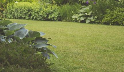 Best Lawnmower 2020 – Buyer's Guide