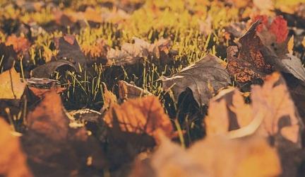 Best Leaf Blower 2020 – Buyer's Guide