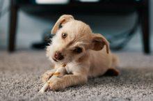 Carpet Cleaner Tips & Myths