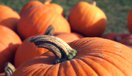 Pumpkin Recipes To Get You Ready For Halloween