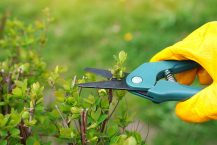 The Best Secateurs for Pruning Your Garden – Our 2021 Guide